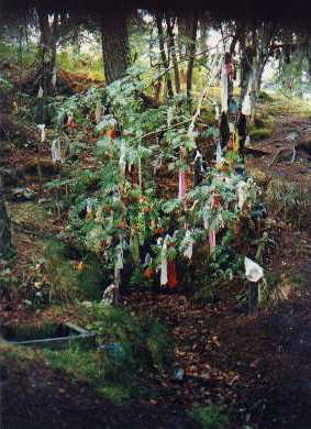 An irish well with a nearby tree decorated with rags from ill people
