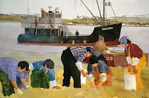 people gathering Kelp on the shore of an island to be shippped to the mainland
