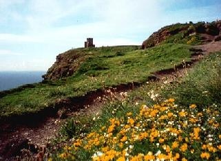 Spring on the coast of Ireland