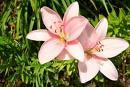 in a wild flower