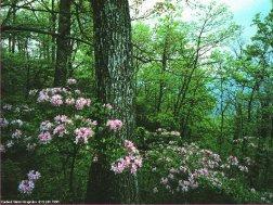 Beltane Forest