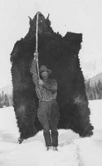 a big bear skin