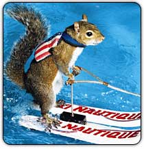 Twiggy the Skiing Squirrel